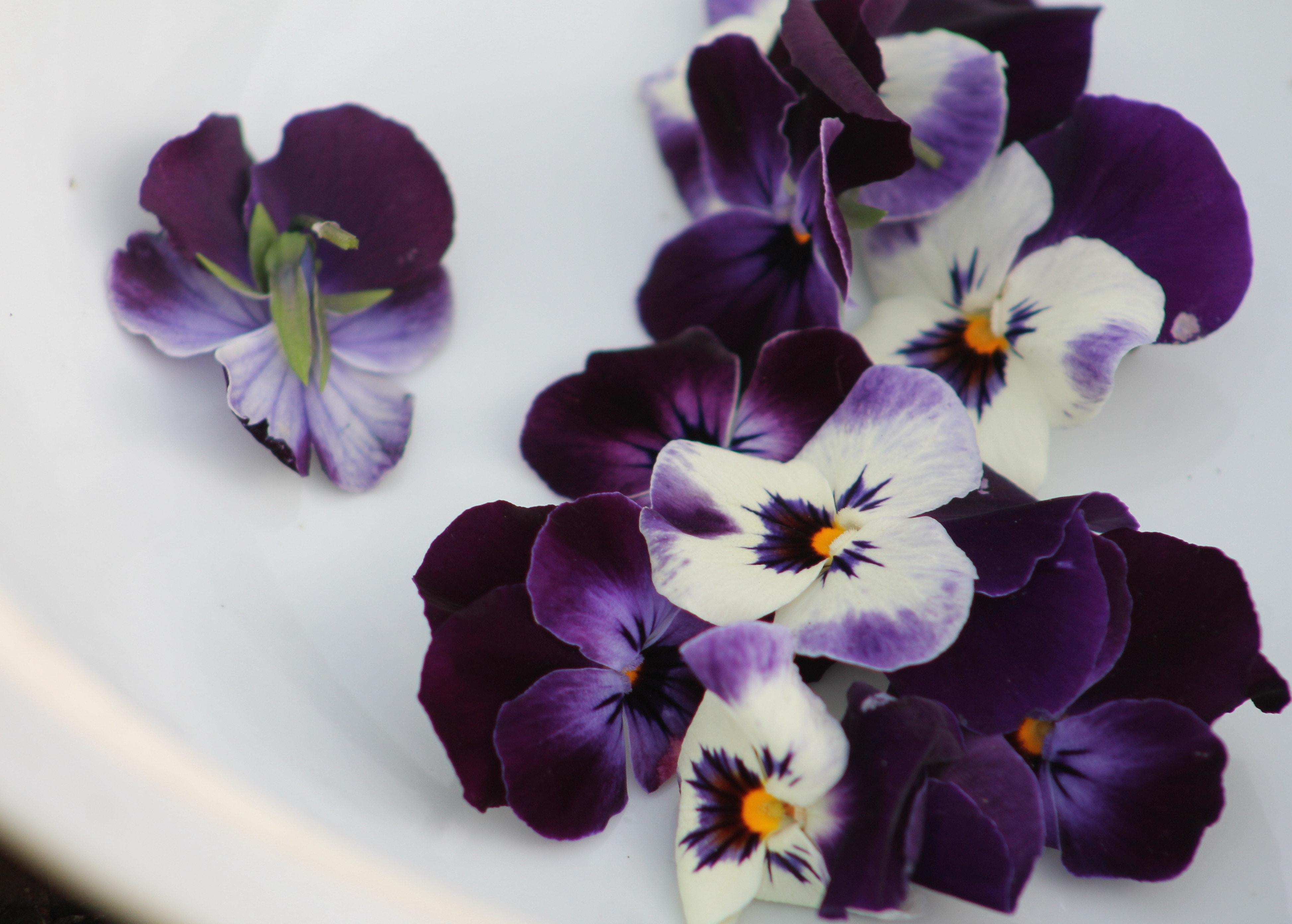 mix of light and dark purple violets