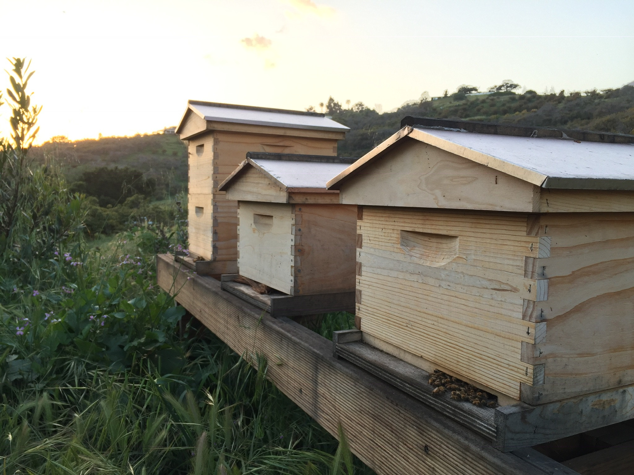 Wooden boxed apiary