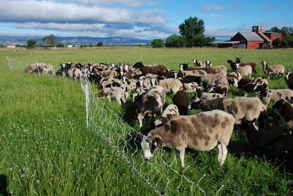 Meridian Jacobs Farm Visit   Coyuchi