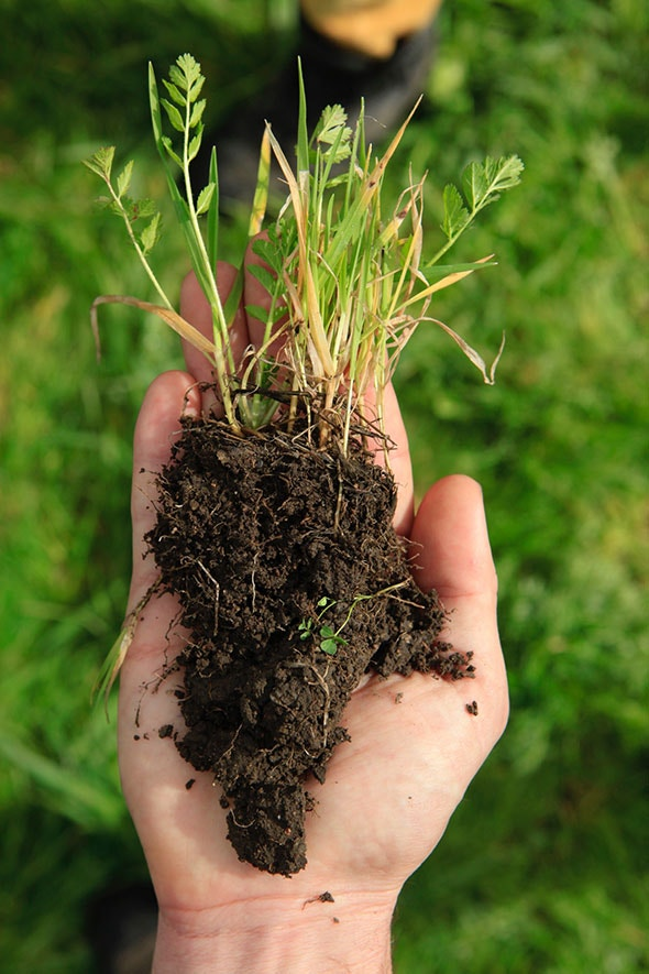 Hand holding soil and grass