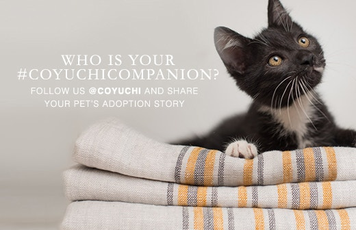 Learn more about the East Bay SPCA