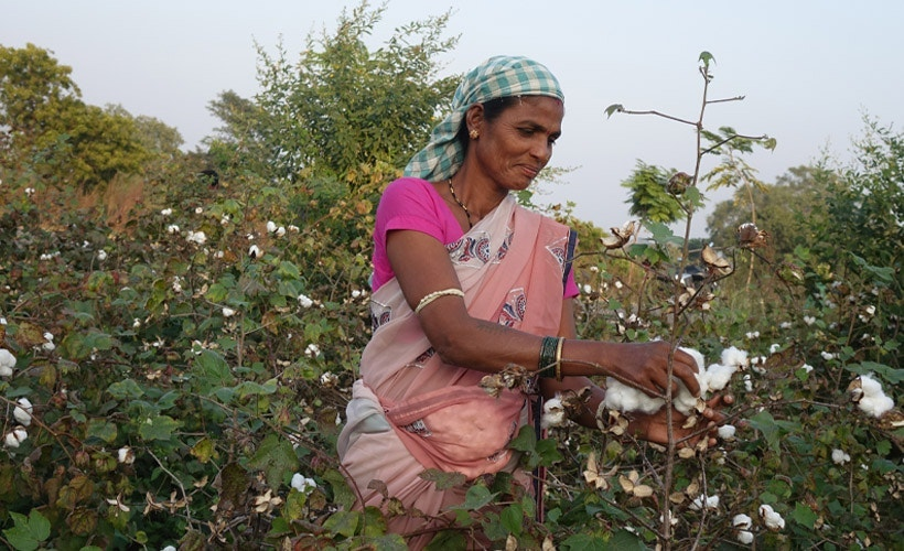 Indian woman farming in cotton field