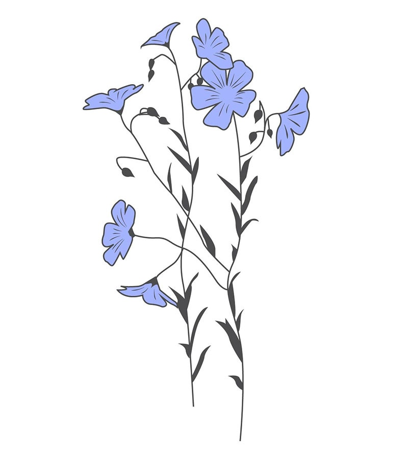 illustration of flax plant