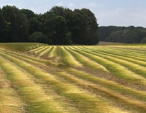 Organic linen field