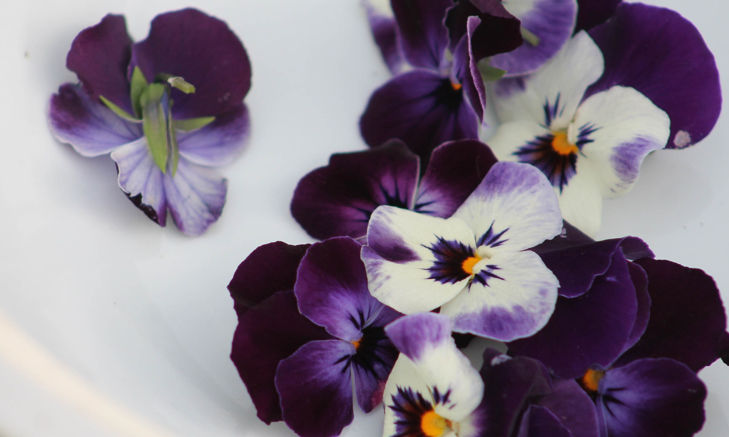 mix of light and dark purple violets
